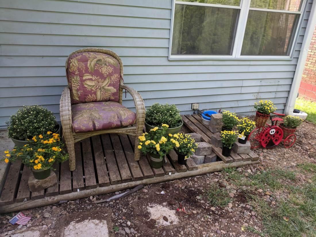 garden fall flowers