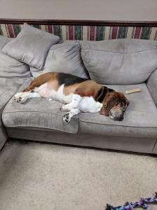 Max sofa 2