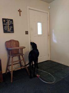 Mimi on guard