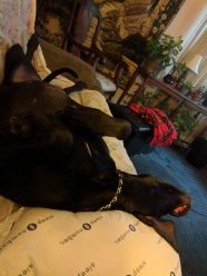 mimi shot with me on sofa