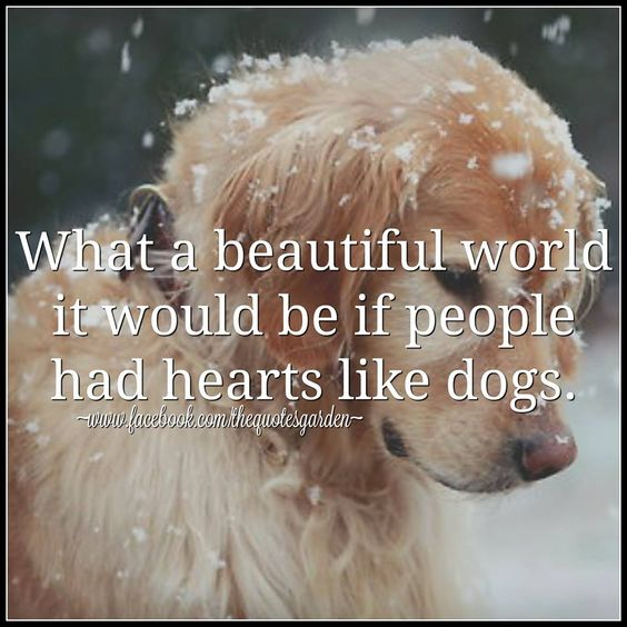 Dogs love 1