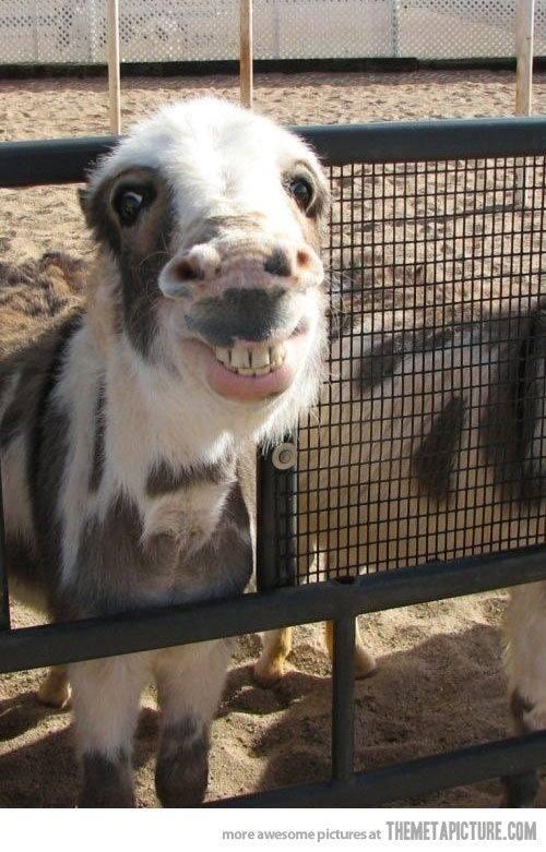 smiledky