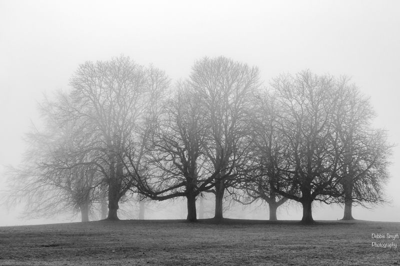trees, Deb Smyth