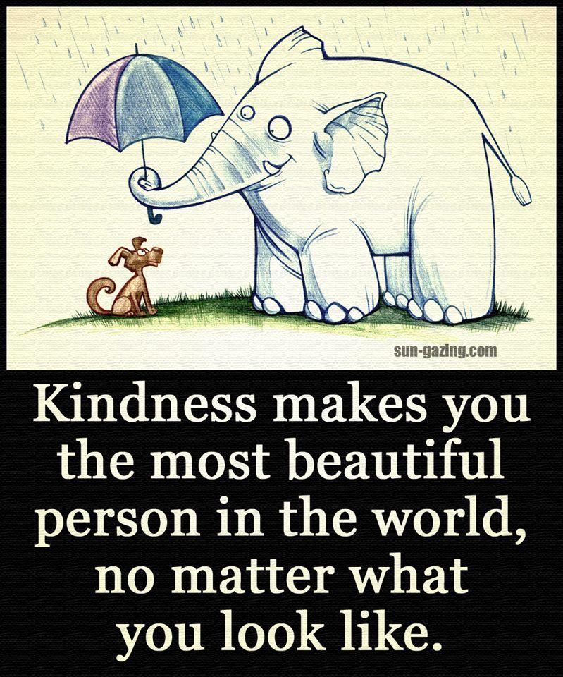 Elephant kindness