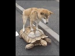 dogturtle