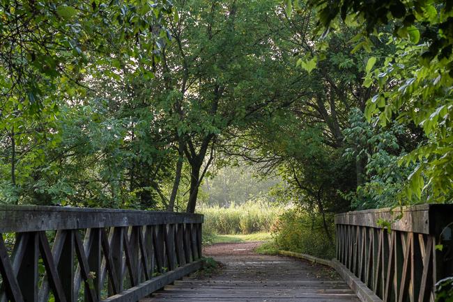 Bridge to Sunshine