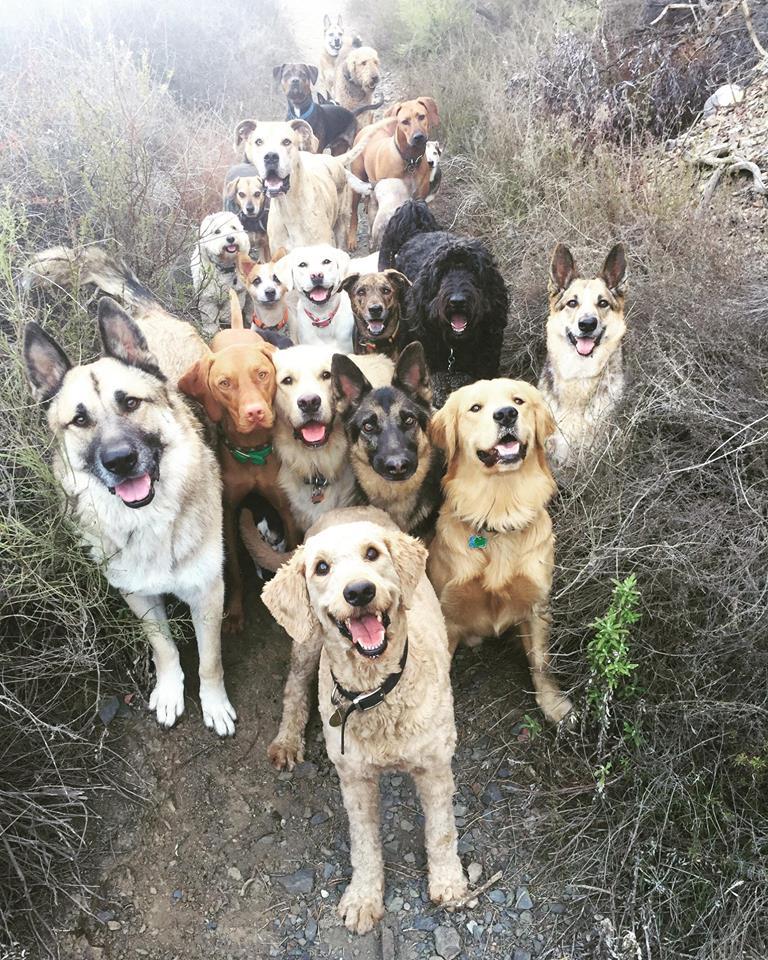 dogs in heavdn