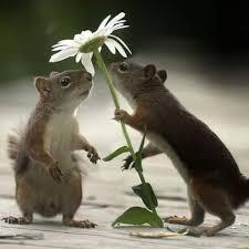 flower squirrel