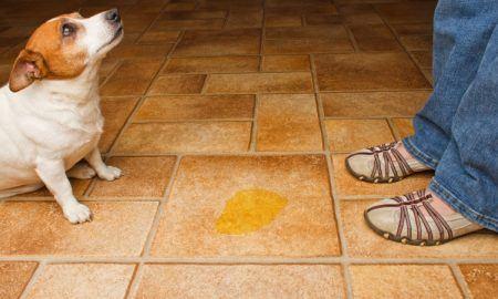 dog accident