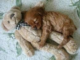 dog cuddle 1